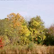 YCT 54 acre CR protects Hospital Bog's autumn color.
